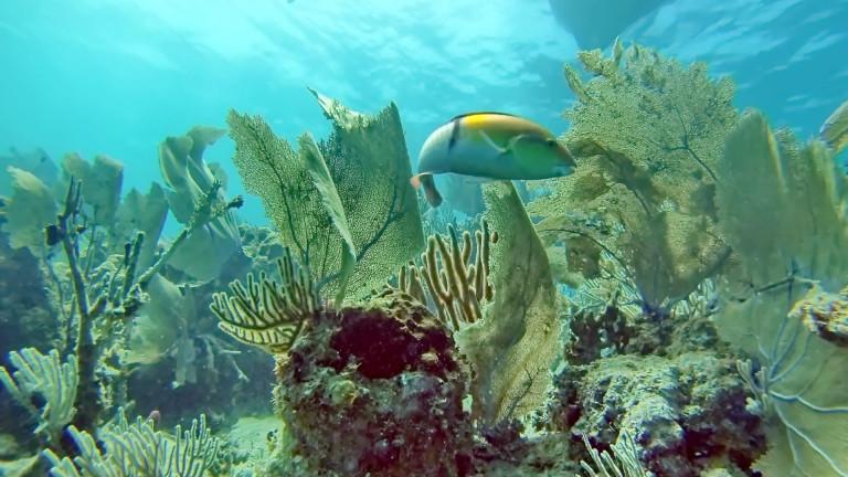 Fish,Above,A,Coral,Head,Off,The,Coast,Of,Utila,